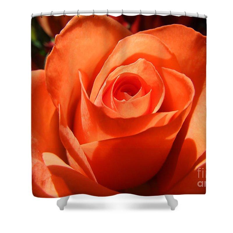 Artoffoxvox Shower Curtain featuring the photograph Orange Rose Photograph by Kristen Fox