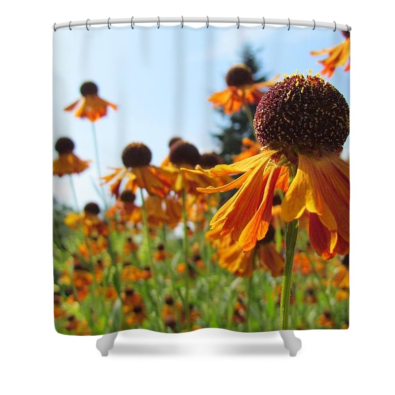 Orange Shower Curtain featuring the photograph Orange Rudbeckia by Tamar Pekker