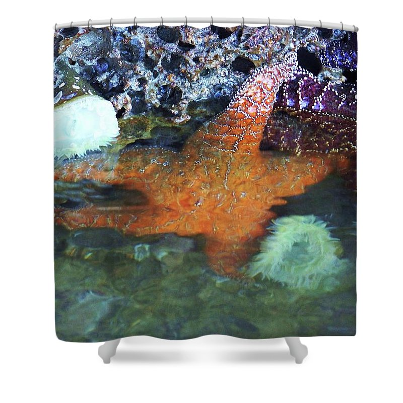 Starfish Shower Curtain featuring the photograph Orange Starfish by Julie Rauscher