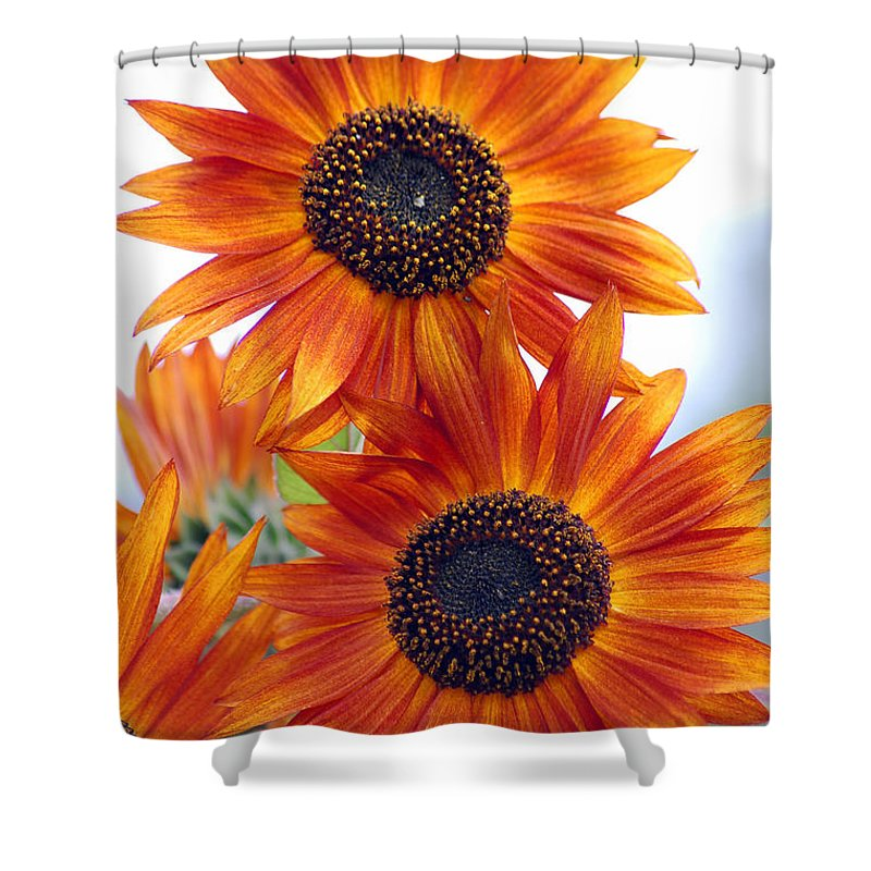 Sunflower Shower Curtain featuring the photograph Orange Sunflower 2 by Amy Fose