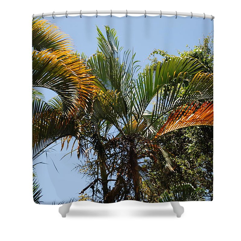 Palms Shower Curtain featuring the photograph Orange Trees by Rob Hans