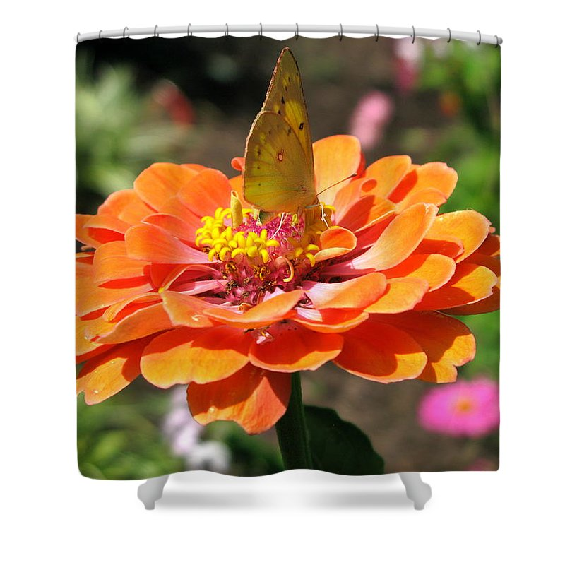 Orange Flower Photography Shower Curtain featuring the photograph Orange Zennia by Brittany Horton