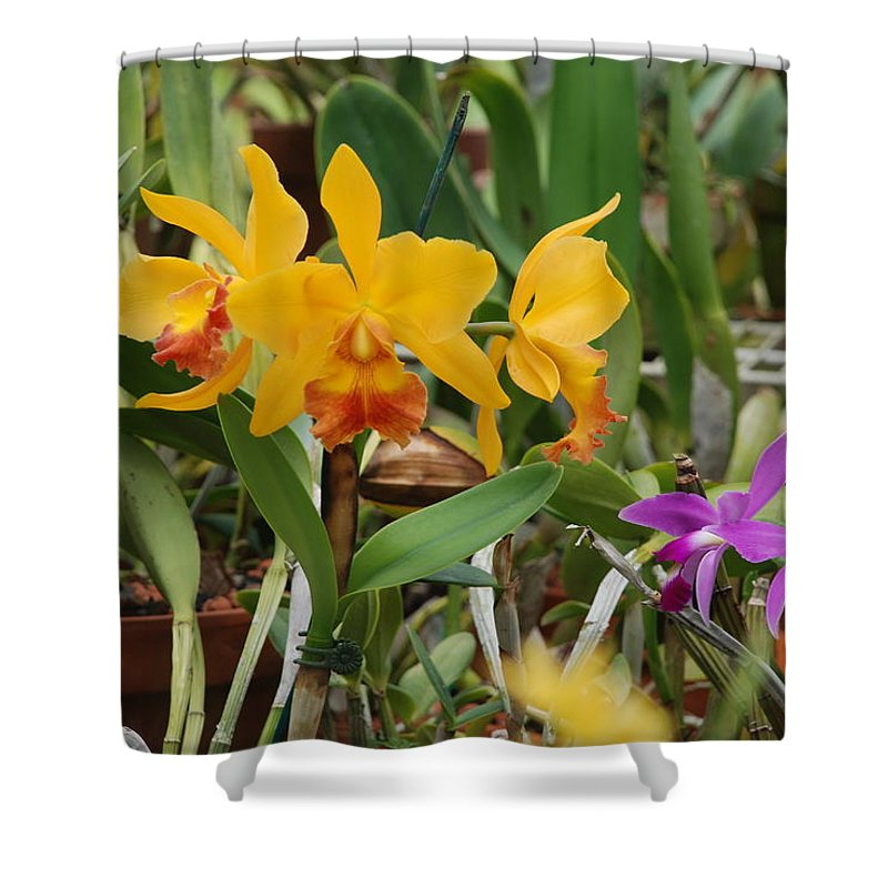 Orange Shower Curtain featuring the photograph Orangepurple Orchids by Rob Hans