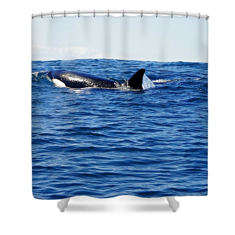 Killer Whale Shower Curtain featuring the photograph Orca by Marilyn Wilson