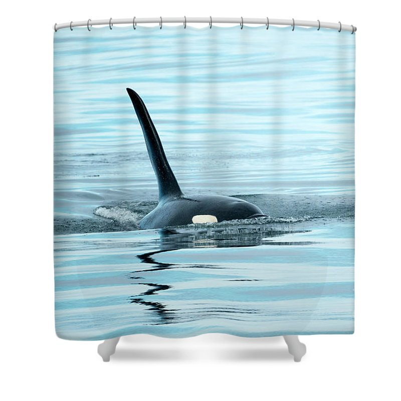 Orca Reflections Shower Curtain For Sale By Mike Dawson