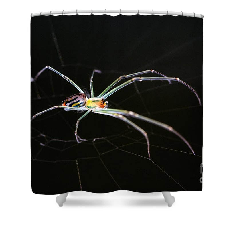 Orchard Orbweaver Spider Shower Curtain featuring the photograph Orchard Orbweaver Spider by Matt Suess