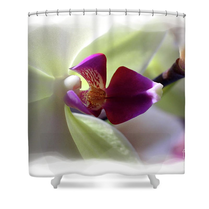 Orchid Shower Curtain featuring the photograph Orchid 2 by David Bearden