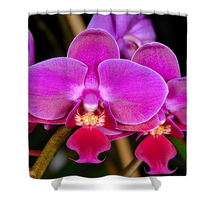 Orchid Shower Curtain featuring the photograph Orchid 422 by Wesley Elsberry