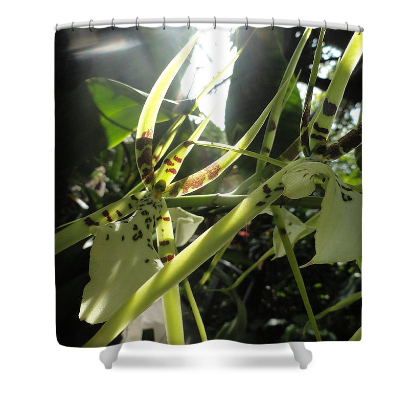 Orchid Shower Curtain featuring the photograph Orchid Light by Trish Hale