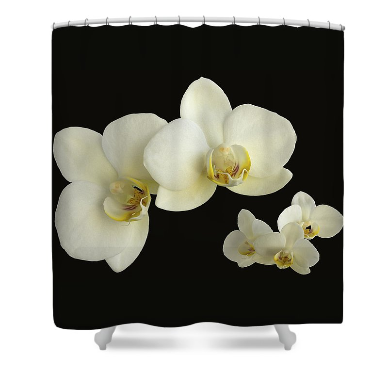 Orchid Shower Curtain featuring the photograph Orchid Montage by Hazy Apple