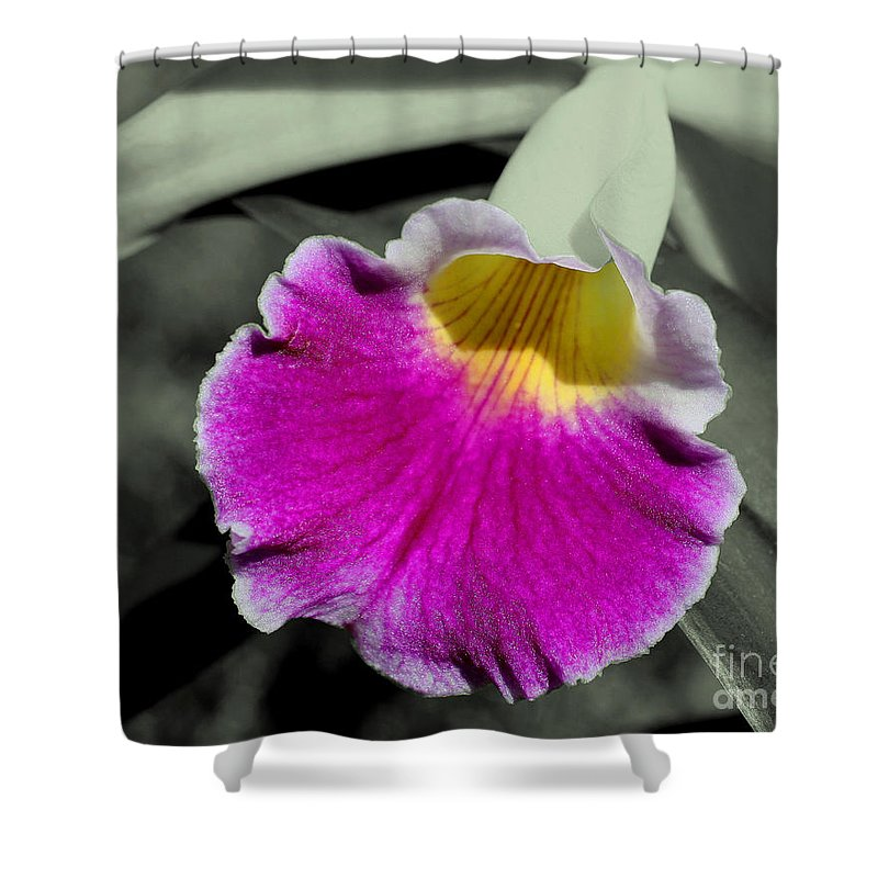 Flower Shower Curtain featuring the photograph Orchid Of A Different Color by Smilin Eyes Treasures