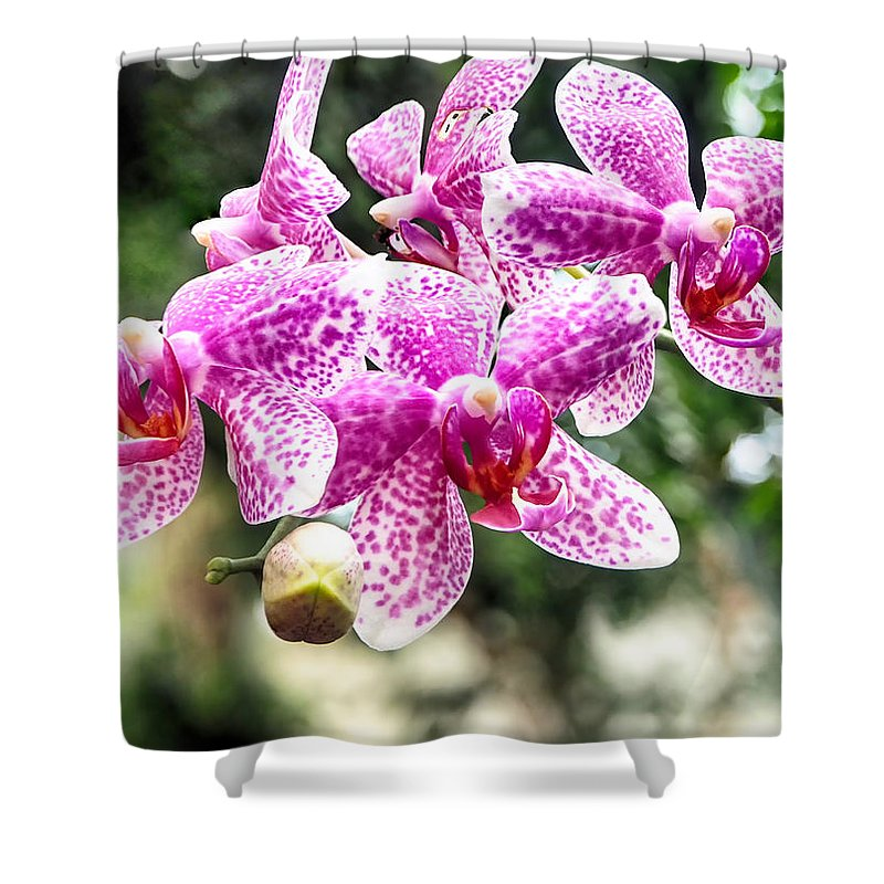 Orchid Shower Curtain featuring the photograph Orchid Phalaenopsis Carnival Bonsall by C H Apperson
