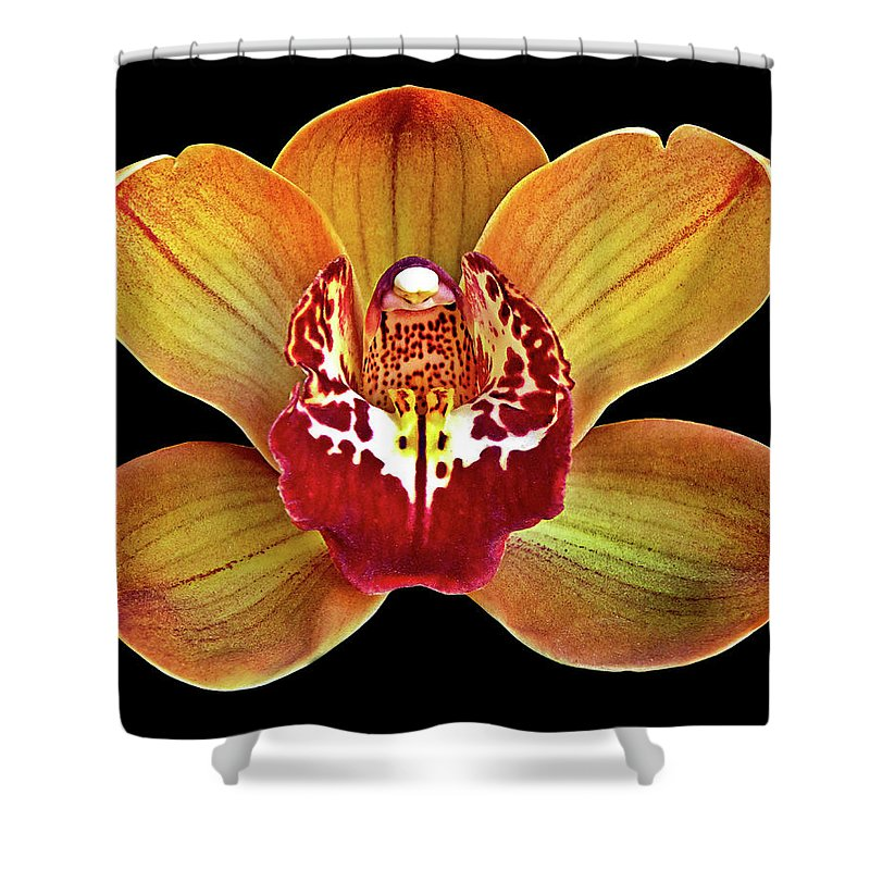 Artistic Photography Shower Curtain featuring the photograph Orchid Splendor by Maria Ollman