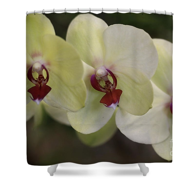 Orchids Shower Curtain featuring the photograph Orchid White Trio by Deborah Benoit
