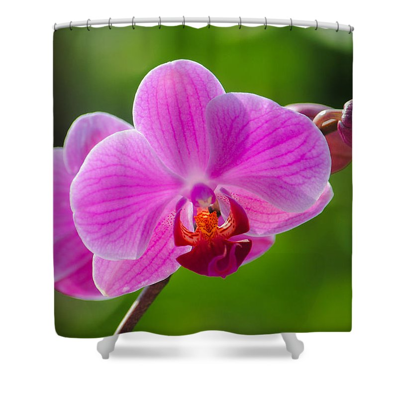 Orchid Shower Curtain featuring the photograph Orchids by Megan Martens