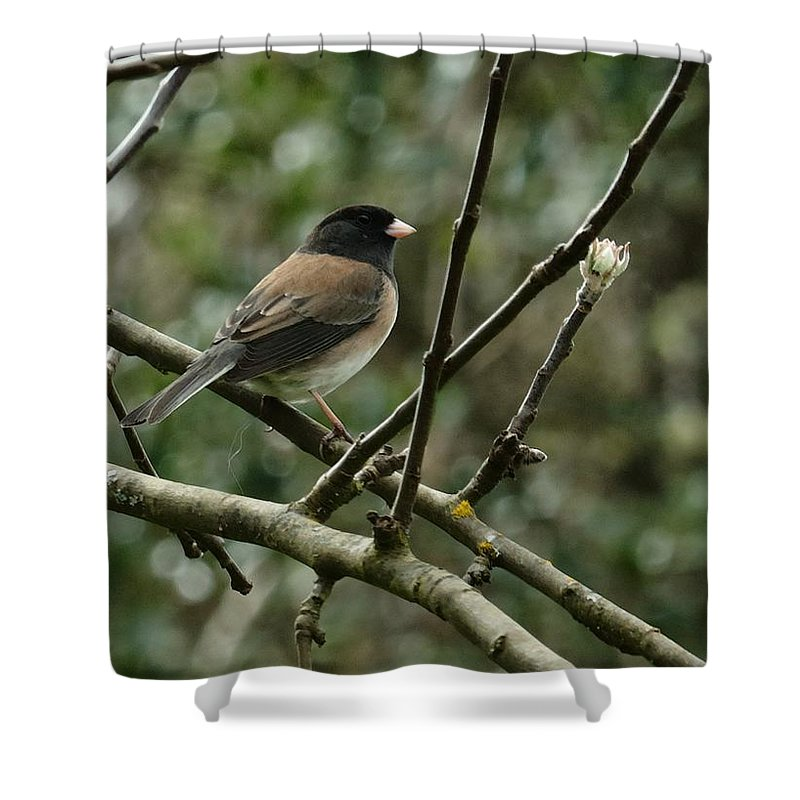 Oregon Junco Shower Curtain featuring the photograph Oregon Junco by I'ina Van Lawick