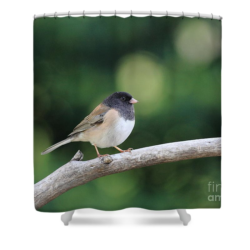 Wildlife Shower Curtain featuring the photograph Oregon Junco by Wingsdomain Art and Photography