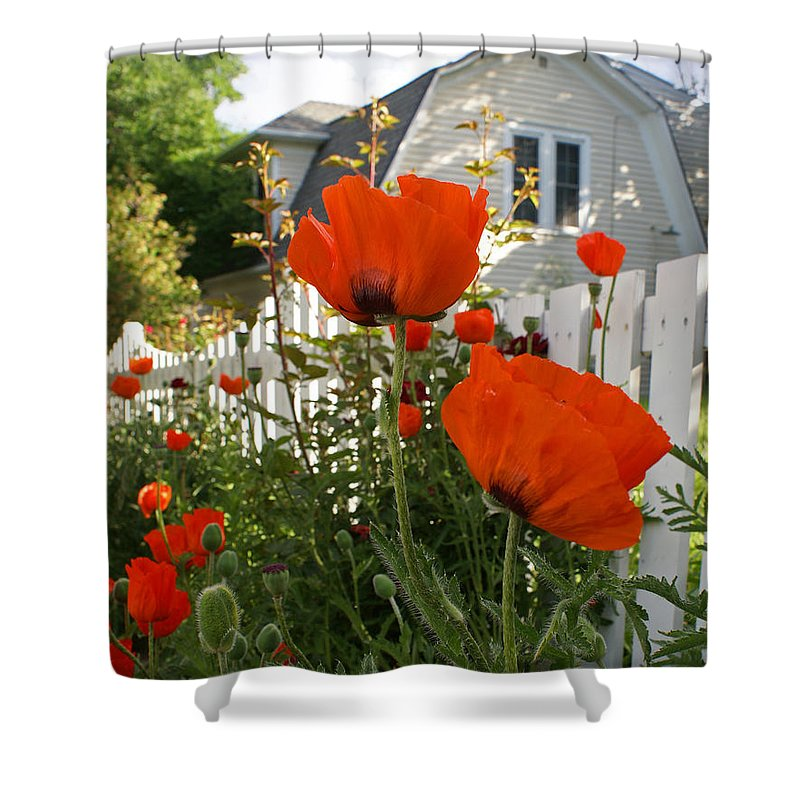 Poppies Shower Curtain featuring the photograph Oriental Poppies by Heather Coen