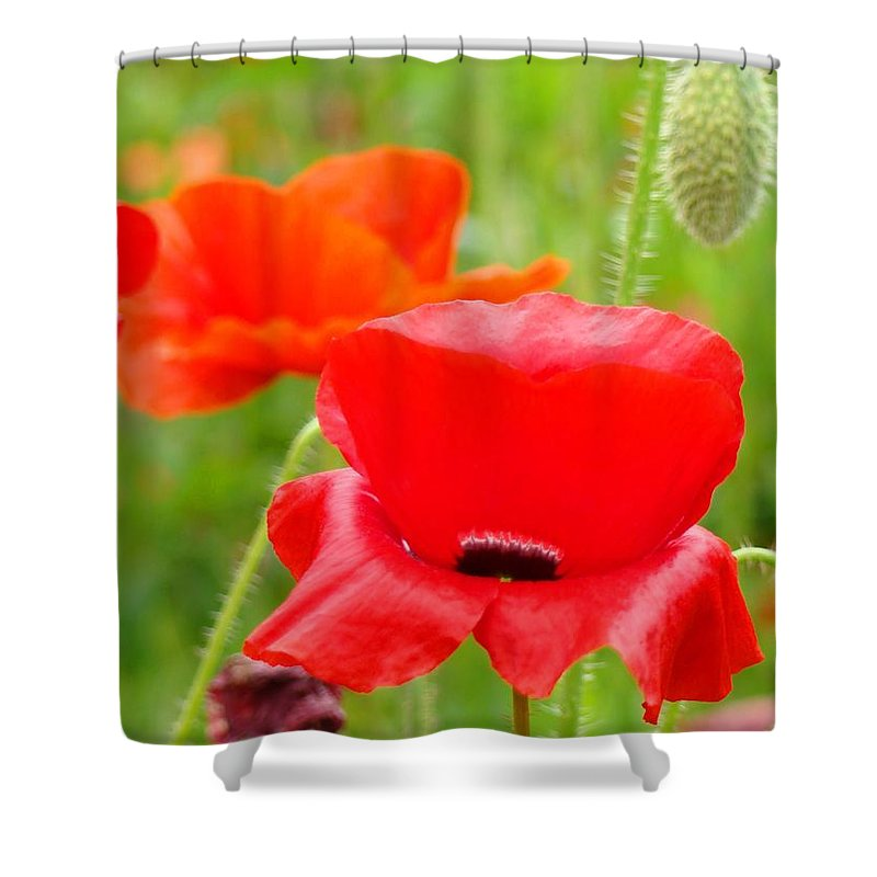 Poppy Shower Curtain featuring the photograph Oriental Poppy Flower Art Prints Poppies Red Baslee Troutman by Baslee Troutman