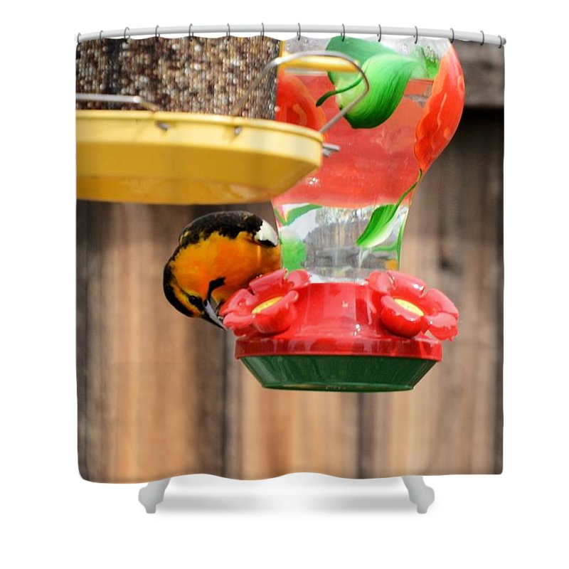 Bird Shower Curtain featuring the photograph Oriole N Nectar by Wendy Fox