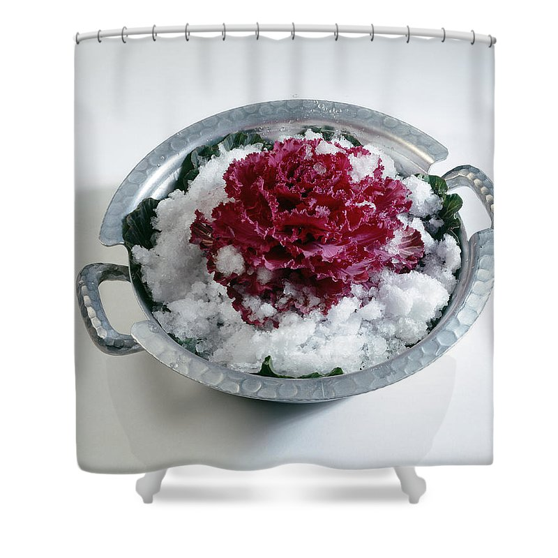 Plant Shower Curtain featuring the photograph Ornamental Cabbage by Stefania Levi