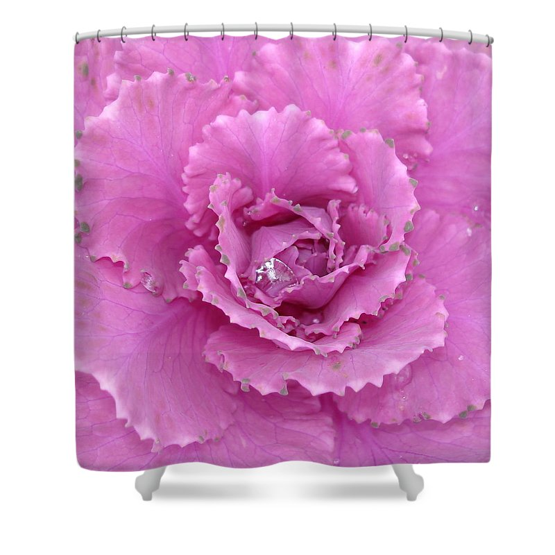 Ornamental Cabbage Shower Curtain featuring the photograph Ornamental Cabbage with Raindrops - Square by Carol Groenen