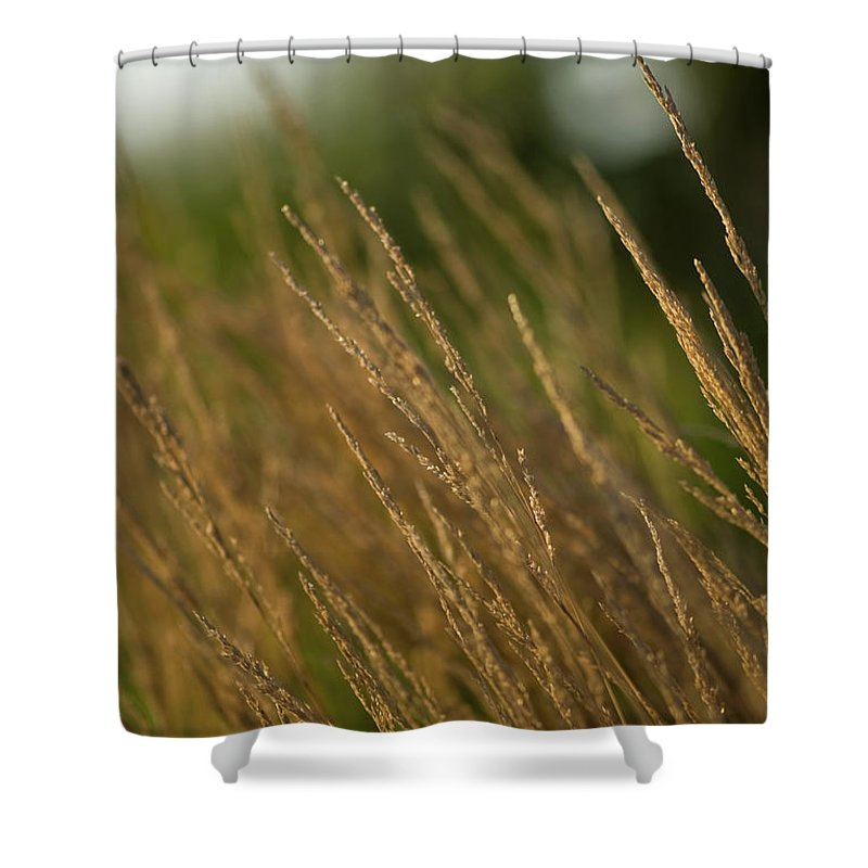 ornamental Grass Shower Curtain featuring the photograph Ornamental Naturally by Paul Mangold