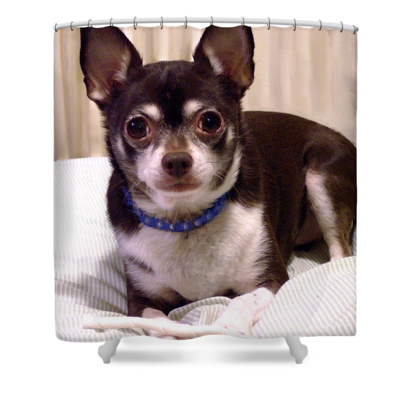 Chihuahua Shower Curtain Featuring The Photograph Oscar By Lucy Max