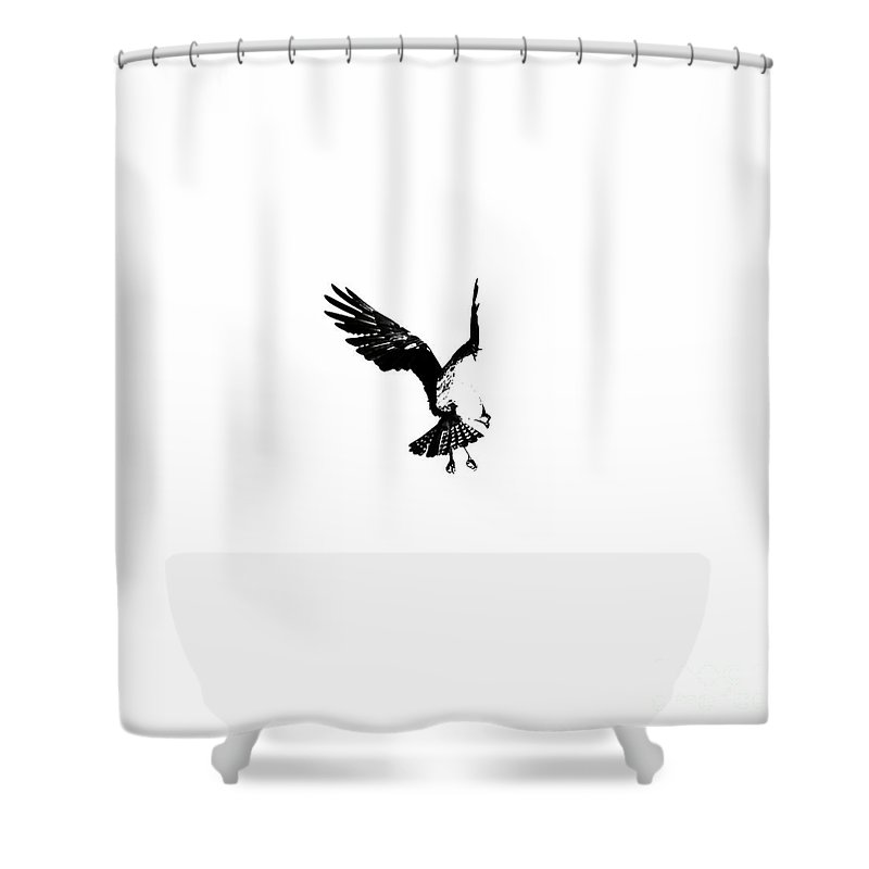 Osprey Shower Curtain featuring the photograph Osprey Hover by Rachel Morrison