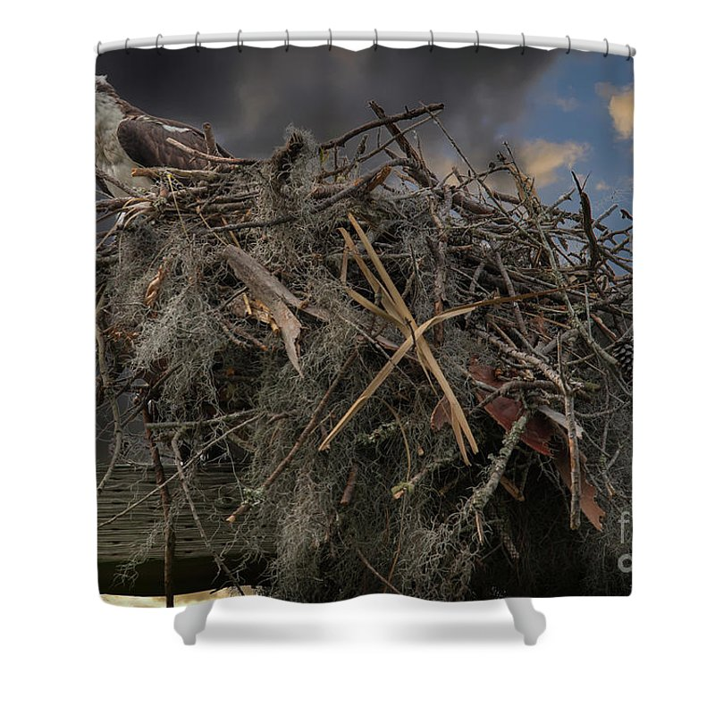 Osprey Shower Curtain featuring the photograph Osprey Protecting The Nest by Dale Powell