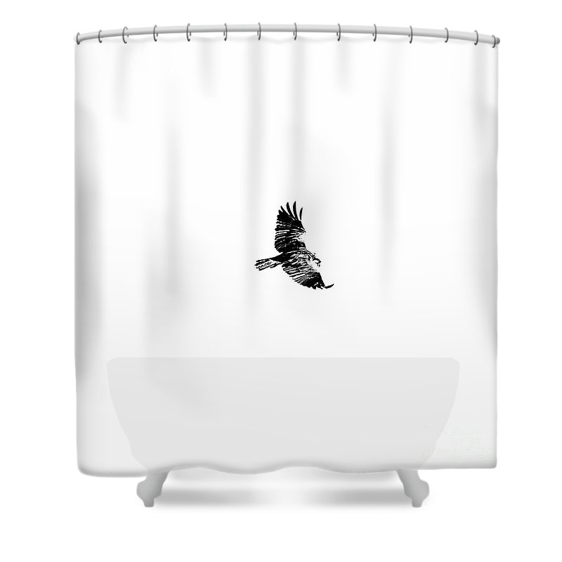 Osprey Shower Curtain featuring the photograph Osprey Soar by Rachel Morrison