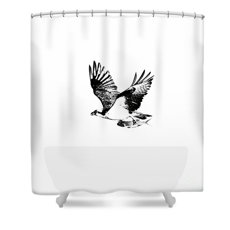 Osprey Shower Curtain featuring the photograph Osprey With Catch by Rachel Morrison