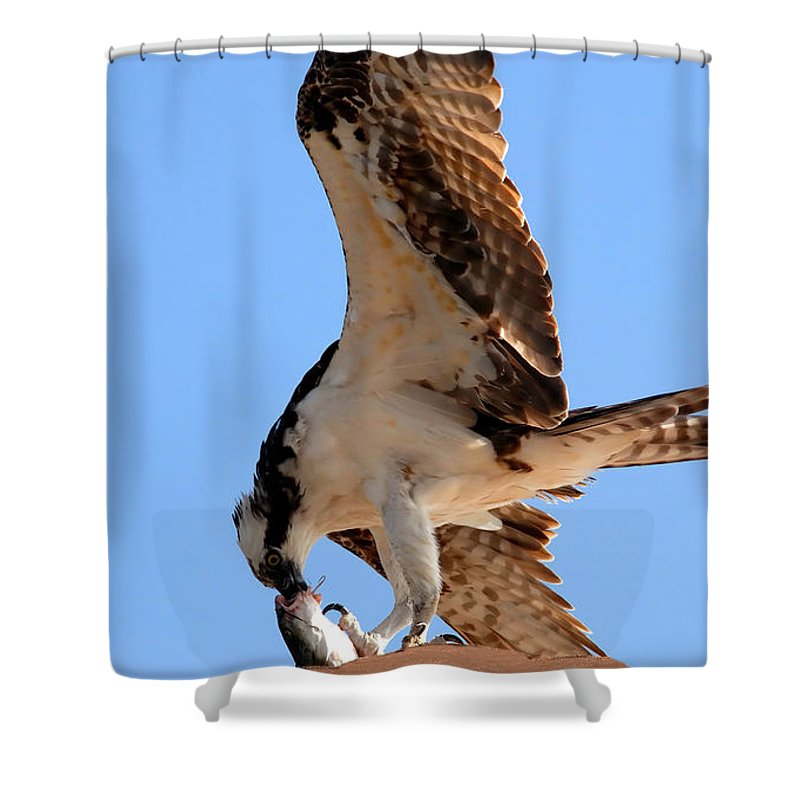 Osprey Shower Curtain featuring the photograph Osprey's Catch by David Lee Thompson