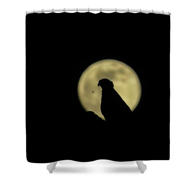 Moon Shower Curtain featuring the photograph Osprey's Silhouette In Full Moon by Zina Stromberg
