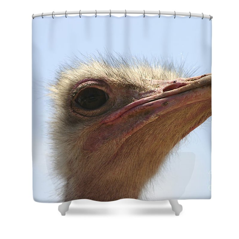 Ostrich Shower Curtain featuring the photograph Ostrich Head Close Up by Danny Yanai