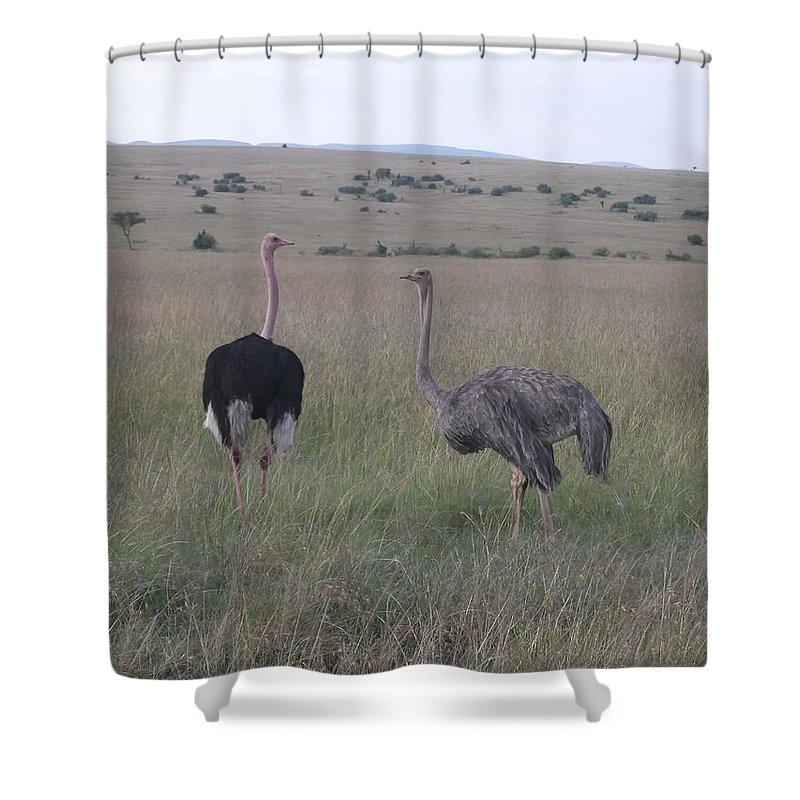 Ostrich Shower Curtain featuring the photograph Ostrich Love by Mohamed El Zaafarani