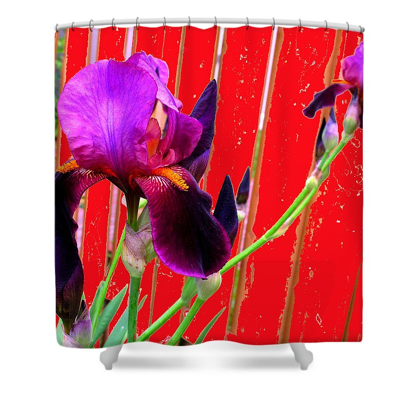 Iris Shower Curtain featuring the photograph Other Side Of The Fence by Ian MacDonald