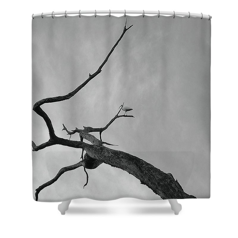 Birds Shower Curtain featuring the photograph Out On A Limb by Robert Meanor