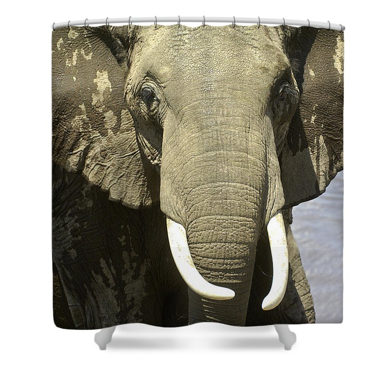 Africa Shower Curtain featuring the photograph Outta My Way by Michele Burgess