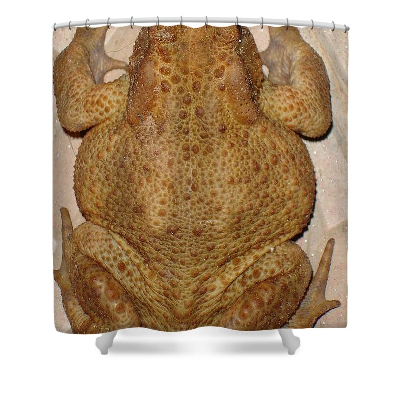 Overhead Anatomy Of A Bufo Bufo Toad Shower Curtain For Sale By
