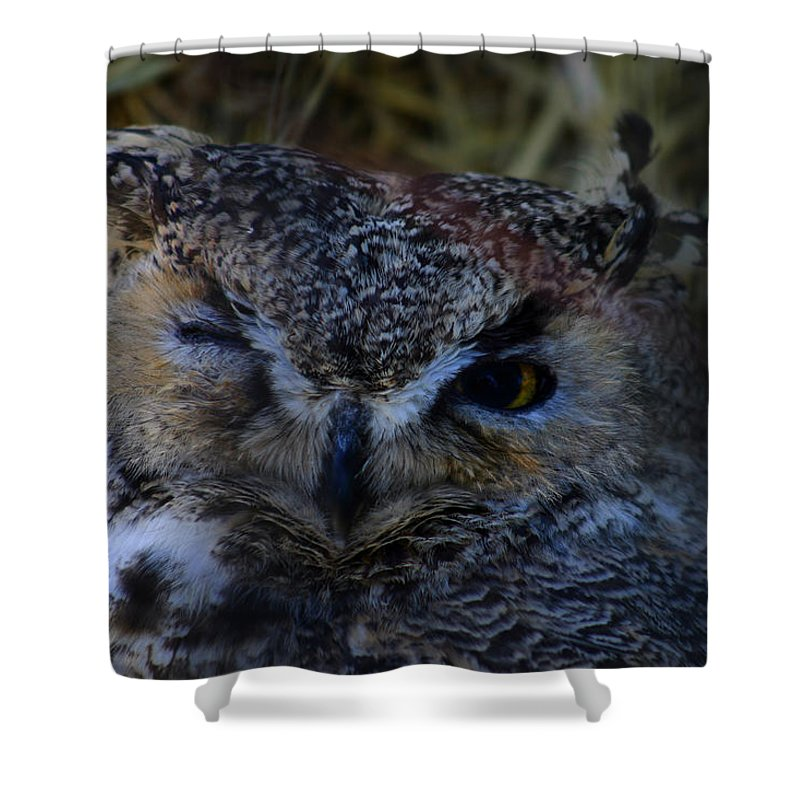Owl Shower Curtain featuring the photograph Owl by Anthony Jones