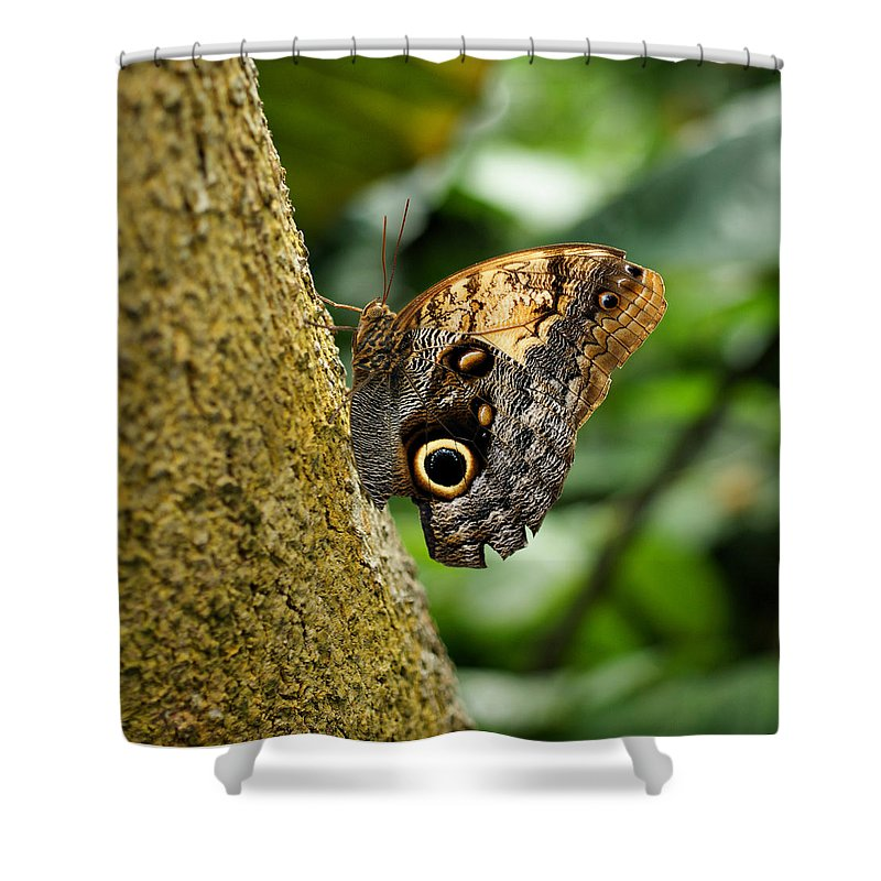 Butterfly Shower Curtain featuring the photograph Owl Butterfly by Sandy Keeton