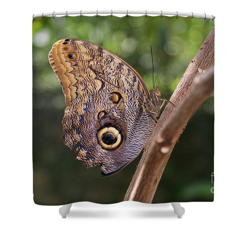 Butterfly Shower Curtain featuring the photograph Owls Don't Always Have Feathers by Shelley Jones
