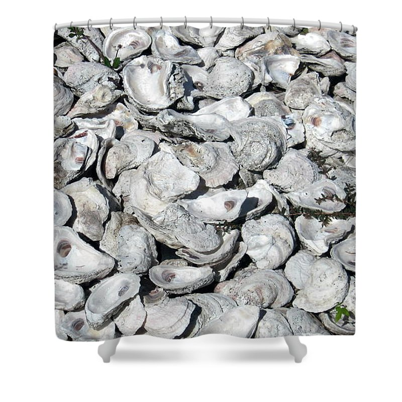 Sea Life Shower Curtain featuring the photograph Oyster Shells On Cumberland Island by Camryn Zee Photography