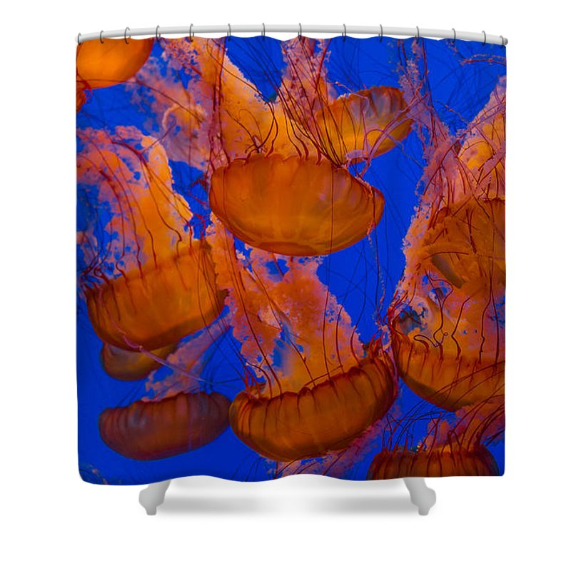 Jelly Fish Shower Curtain featuring the photograph Pacific Sea Nettle Cluster 1 by Scott Campbell