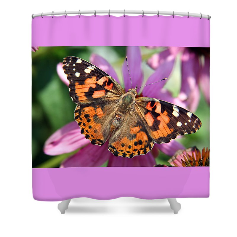 Painted Lady Shower Curtain featuring the photograph Painted Lady Butterfly by Margie Wildblood