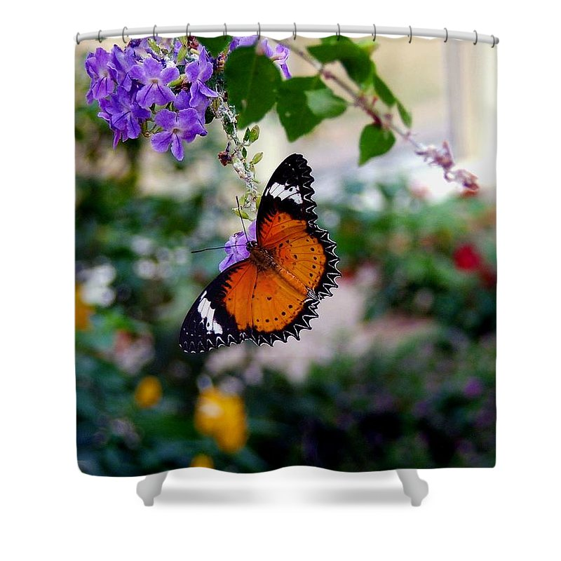 Butterfly Shower Curtain featuring the photograph Painted Lady by Robert Meanor