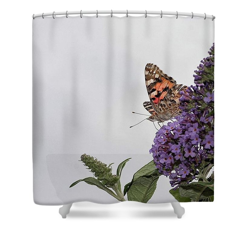 Insectsofinstagram Shower Curtain featuring the photograph Painted Lady (vanessa Cardui) by John Edwards