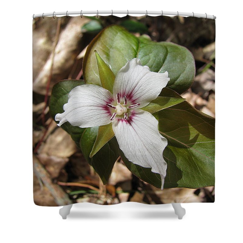 Trillium Shower Curtain Featuring The Photograph Painted Wildflower By David Hand