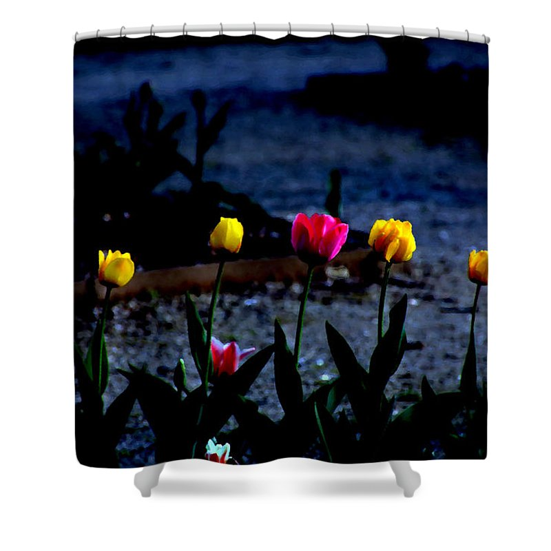 Tulips Shower Curtain featuring the photograph Painted Tulips by Debbie Nobile